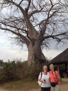 wilson blog 8-22Bushman Baobob