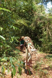 Women carrying wood down Mount Mulanje